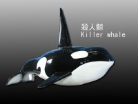 殺人鯨 Killer whale